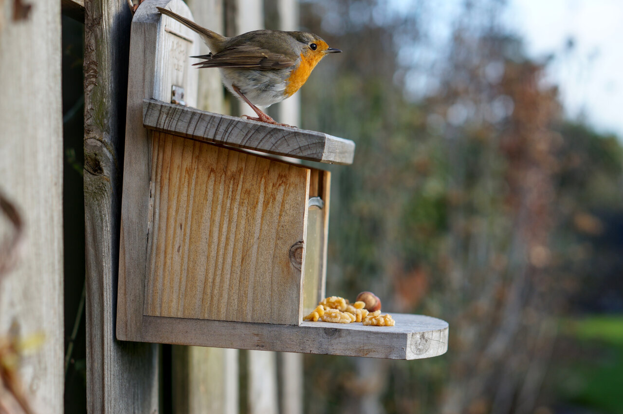 The image shows the same nut box like all the other images, but instead of a squirrel a robin is sitting on top of the box.