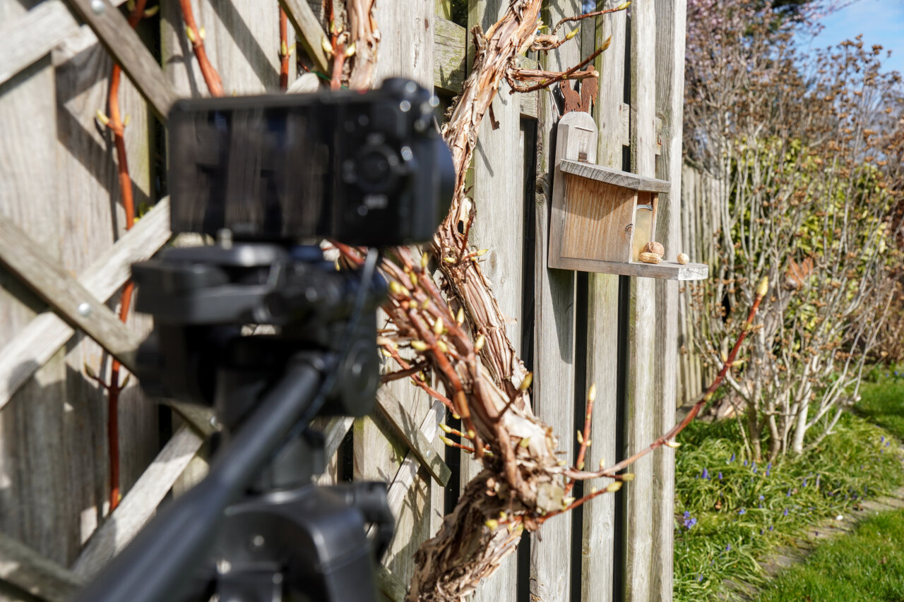 Image of a camera on a tripod (out of focus in the foreground) pointing at a nut box mounted to a fence.